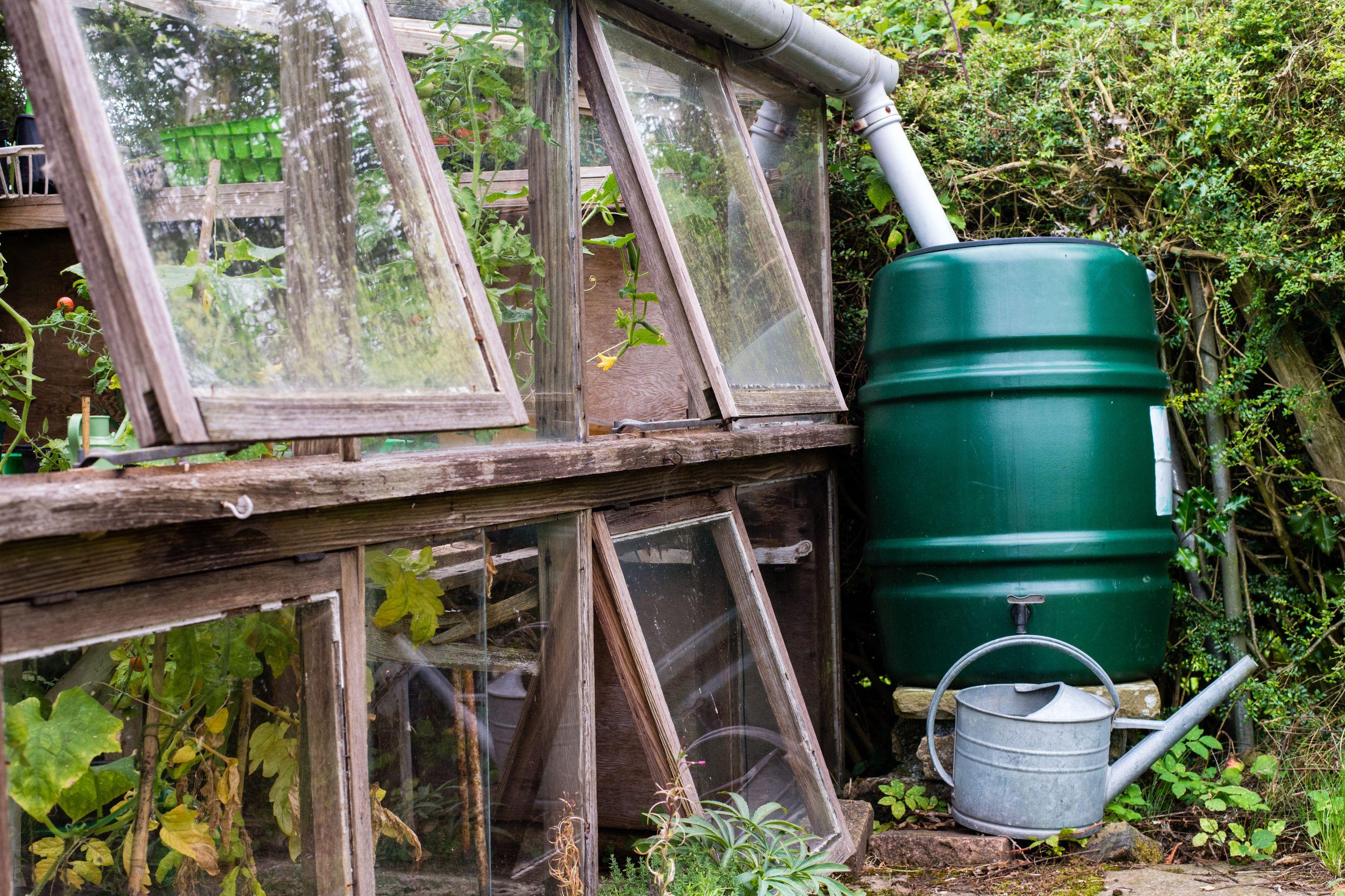 Rain barrel outside greenhouse