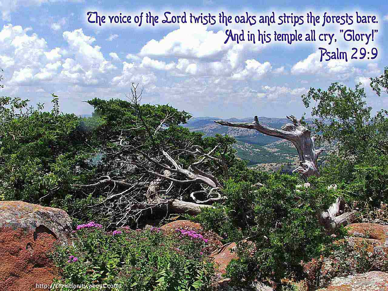 Twisted Trees on Rocky Vista with bible verse