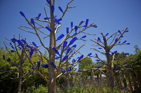 Clear blue glass bottles attached to tree branches