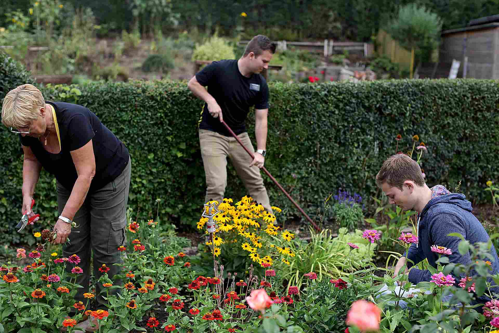 Yard work service being done by missionaries