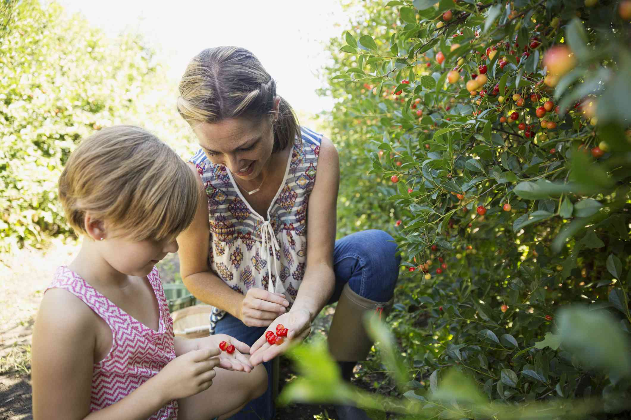 Mom and daughter picking berries