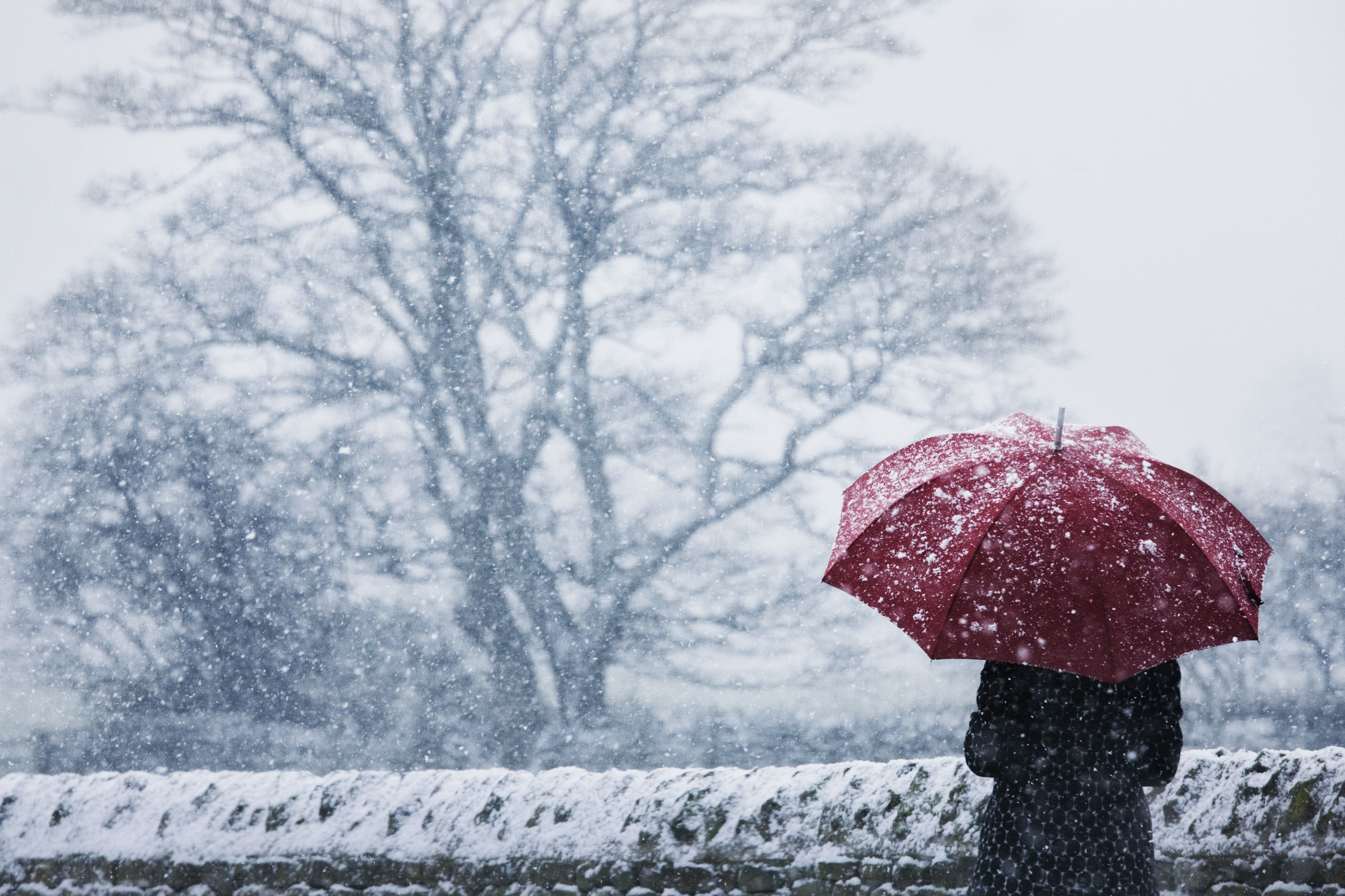 woman sheltering under umbrella in a snow storm
