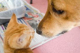 Close-Up Of Kitten And Dog At Home
