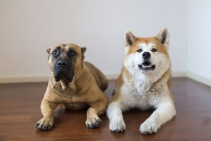 dogs together