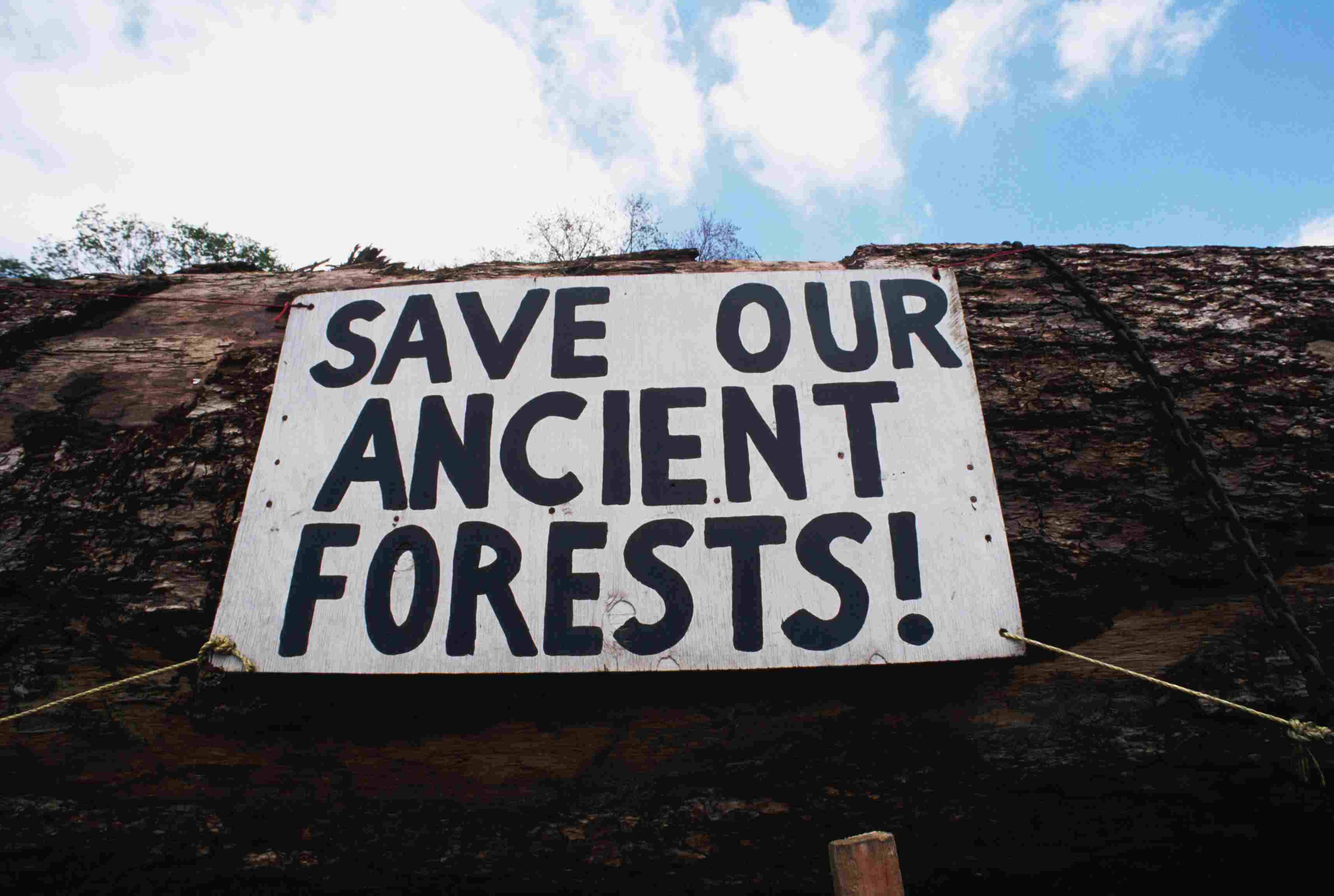 Environmental Protest Sign on Log