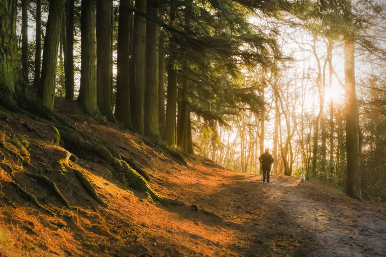 Person walking along a sunlit forest path.