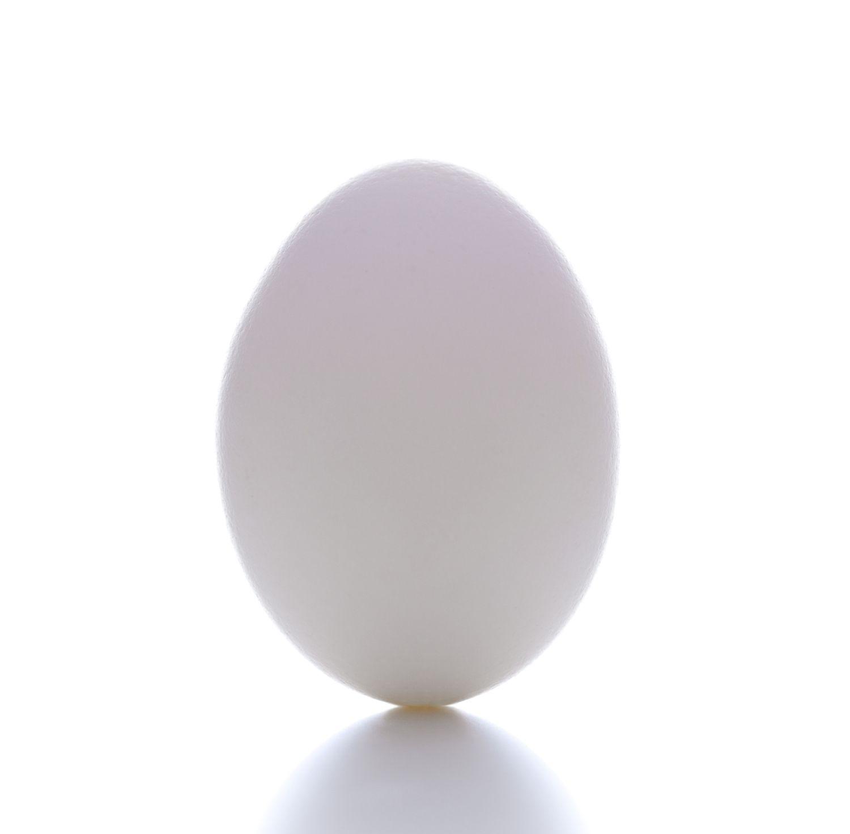 EggBalance_1500.jpg