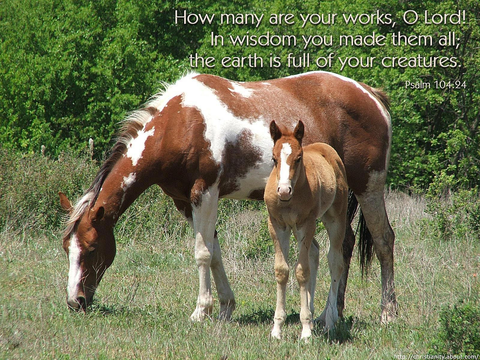 Horses with bible verse