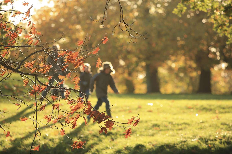 Kids on Autumn Hike