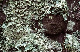 A statue of Buddha overgrown by lichen in Kyoto, Japan.