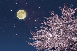 Moon stars and cherry blossoms