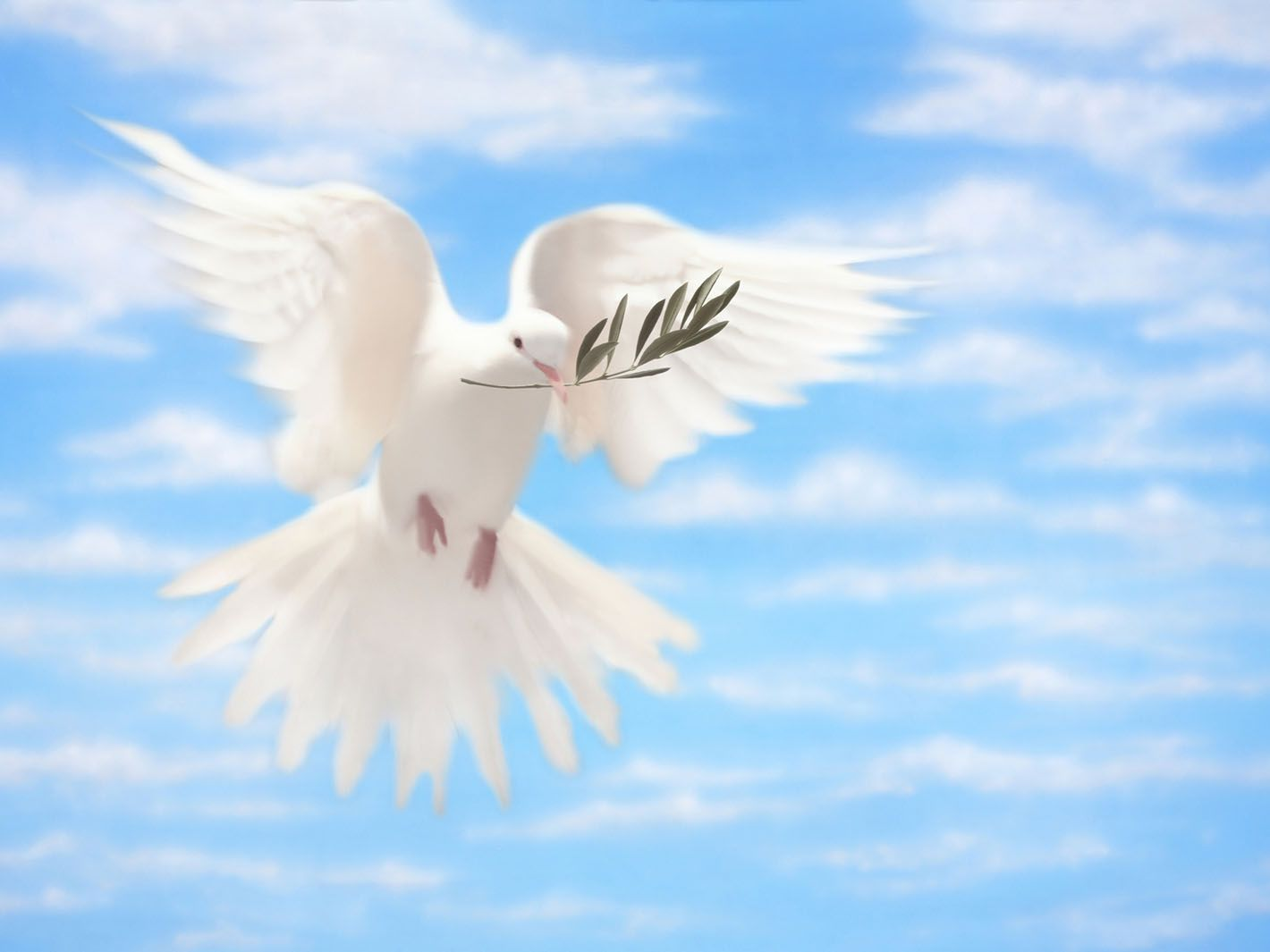 What Are The 12 Fruits Of The Holy Spirit
