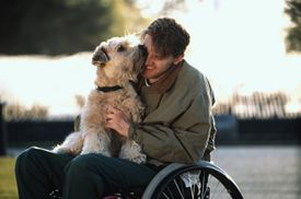 dog disabled man wheelchair