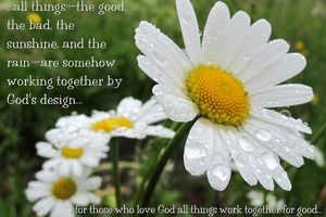 Daisies with Bible verse