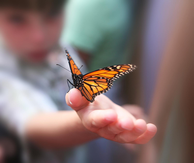 Butterfly_1500