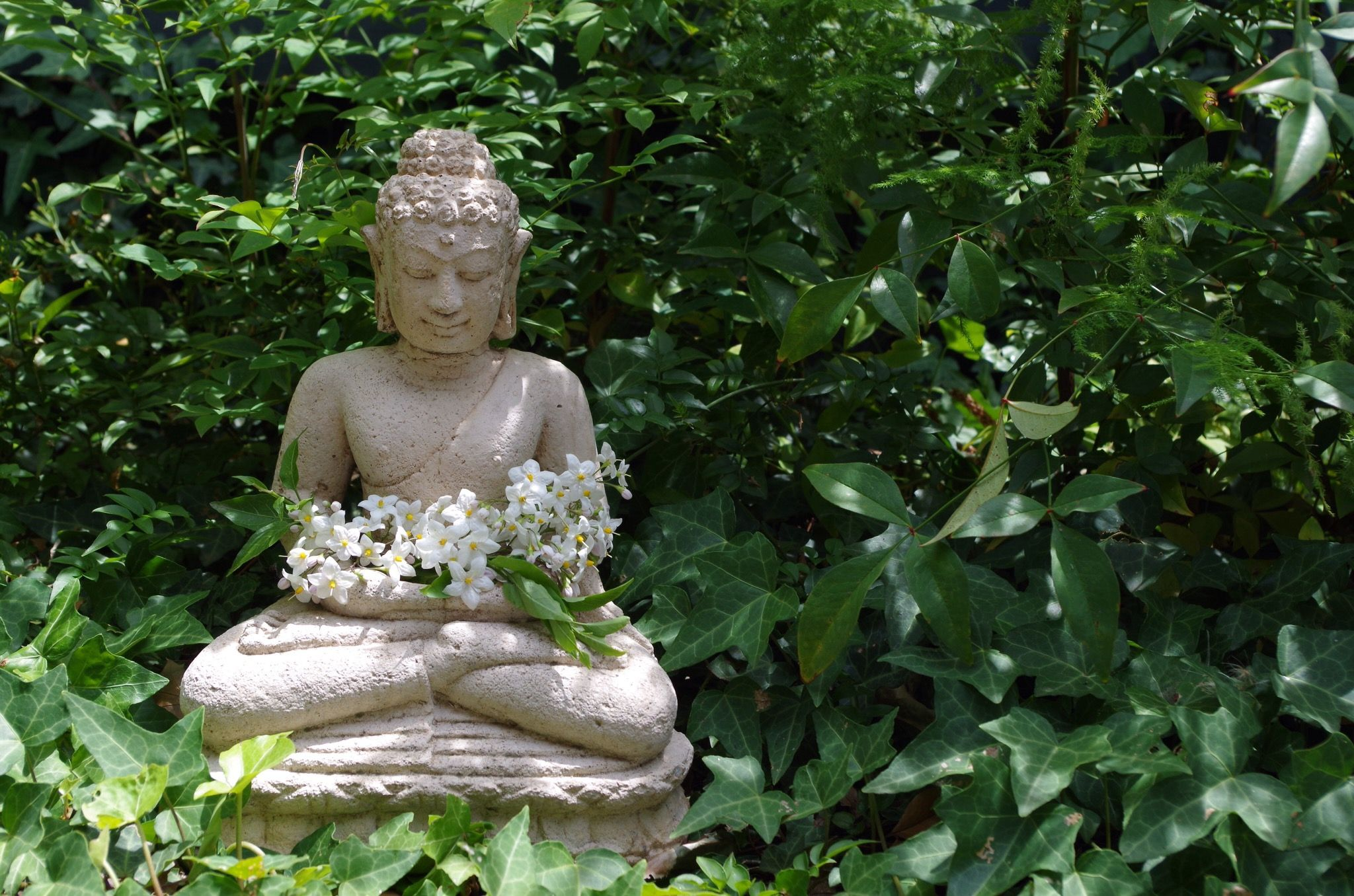 Many Misunderstand What the Buddha Taught About Karma and Rebirth
