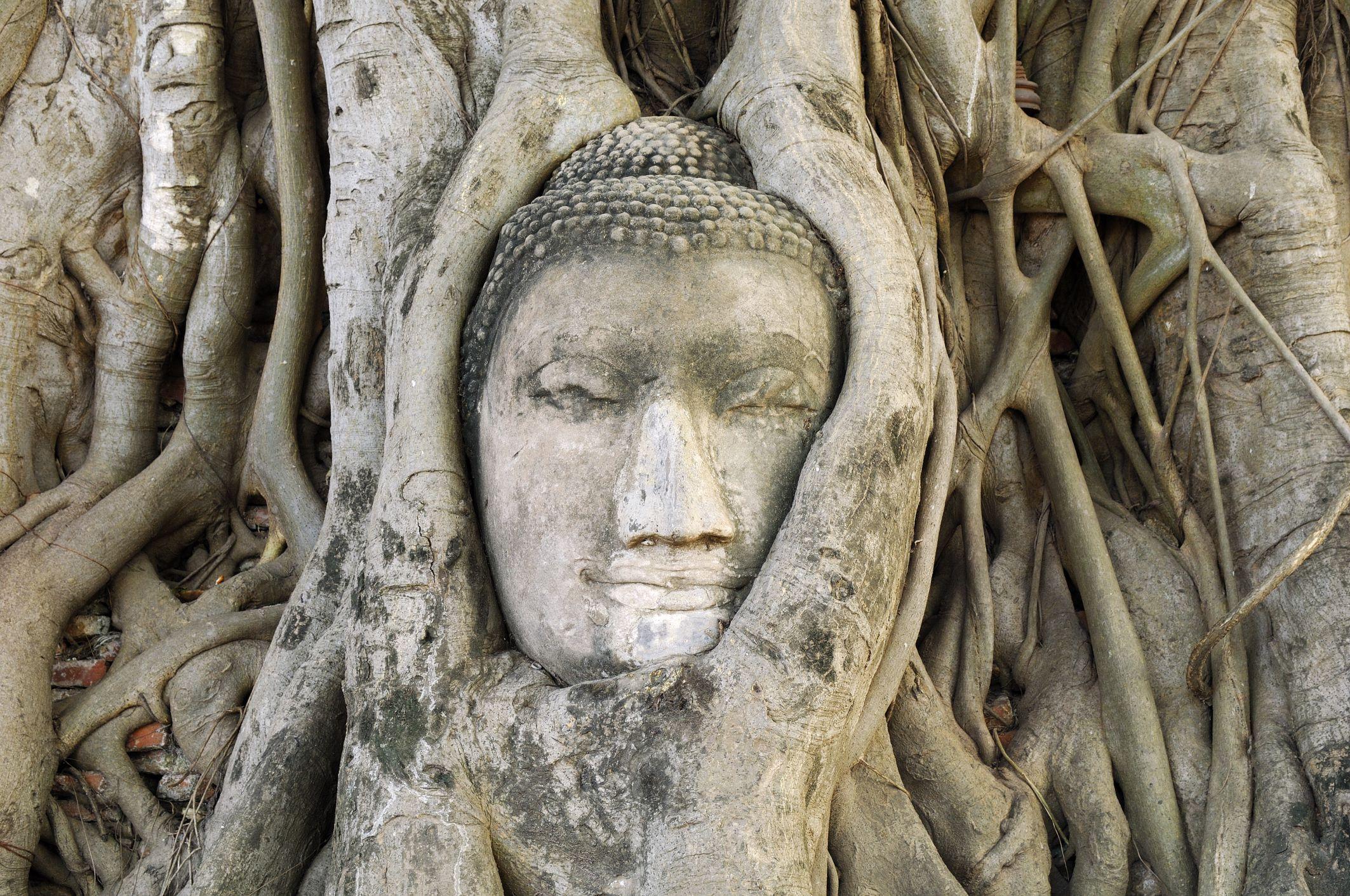 Ayutthaya Buddha Head closer
