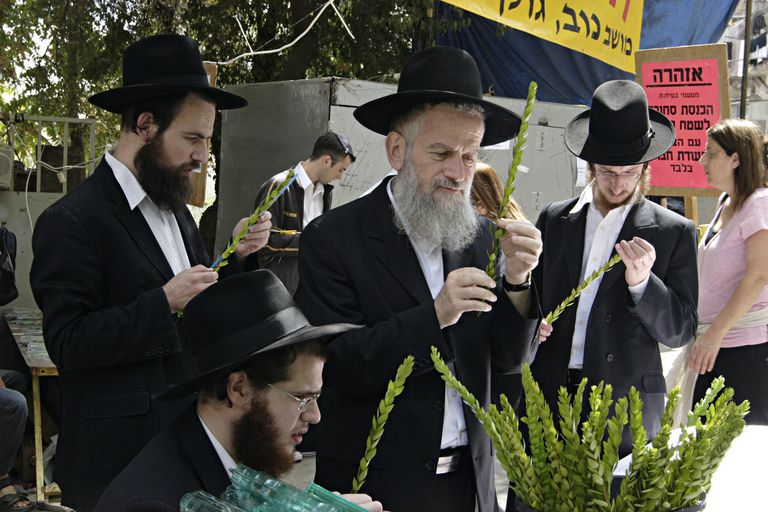 The Four Species market, on the eve of Sukkot, (Feast of Tabernacles) Mea Shearim, Jerusalem. Israel. Orthodox Jews inspecting leaves of Myrtle tree branch. The leaves have to grow evenly in each set of three, otherwise they cannot be used. Perfecti