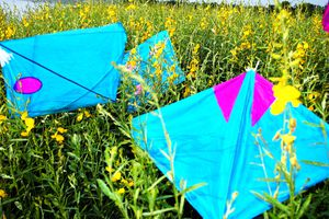 Colourful kites in a field
