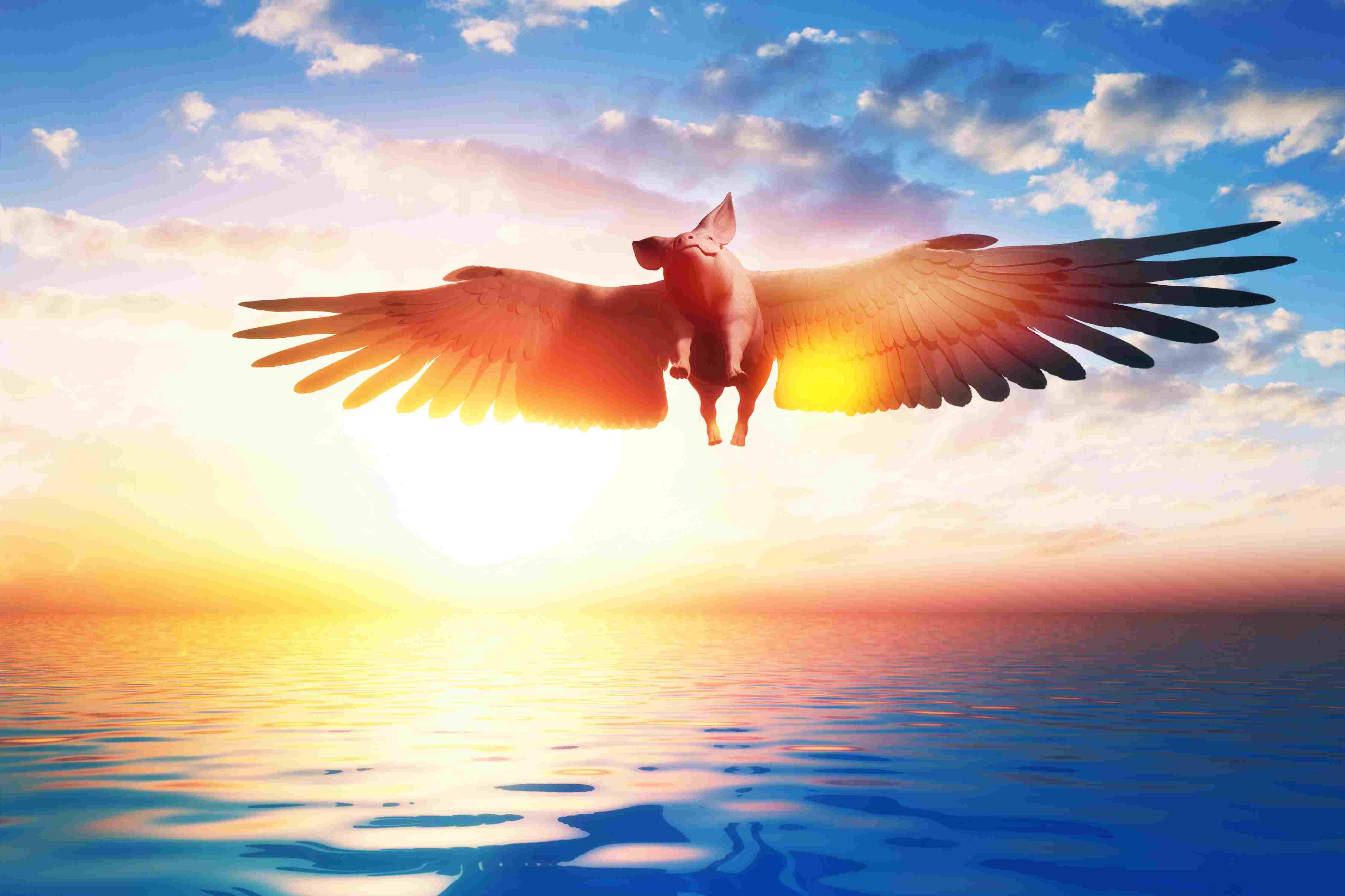 Flying pig over the fantasy landscape