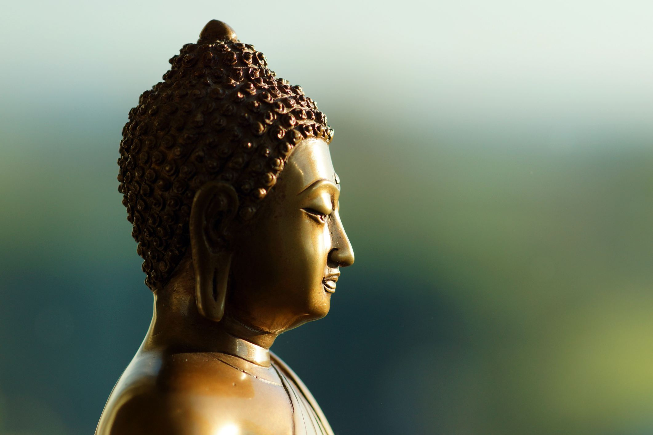 Buddha Acorn Head