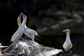 A lone bird watching a bird couple on the rocks.