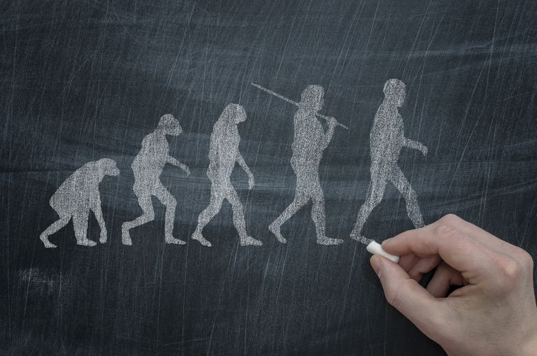 A drawing of human evolution on a chalkboard