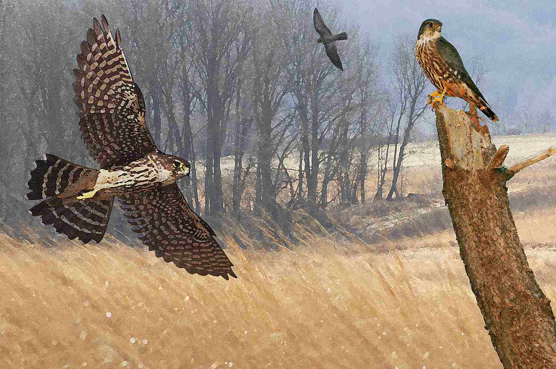A montage of falcons