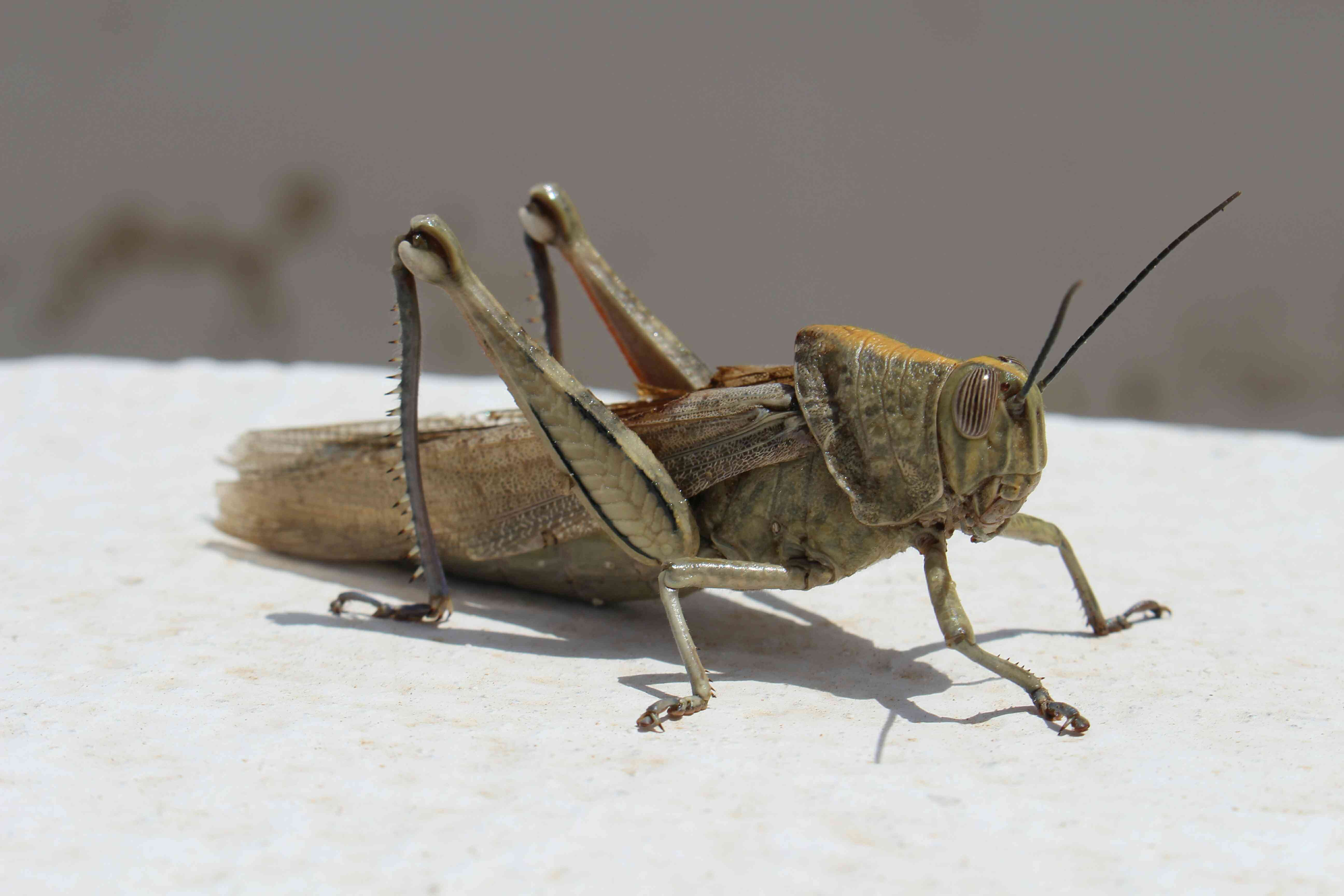 Close-Up Of Cricket Perching Outdoors