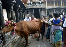 Devotees of Siva at Nataraja temple in India