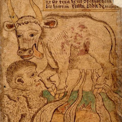 Auðumbla Licks Búri. Illustration from an 18th century Icelandic manuscript.