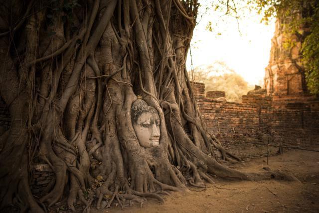 Ayutthaya-Buddha-Head.jpg