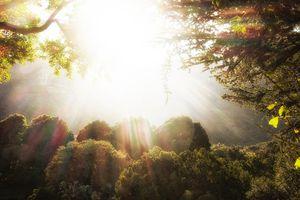 sun coming through trees in Garden of Eden