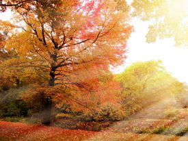 Enchanted forest in autumn