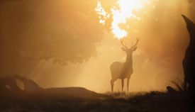 Deer in the Sunrise