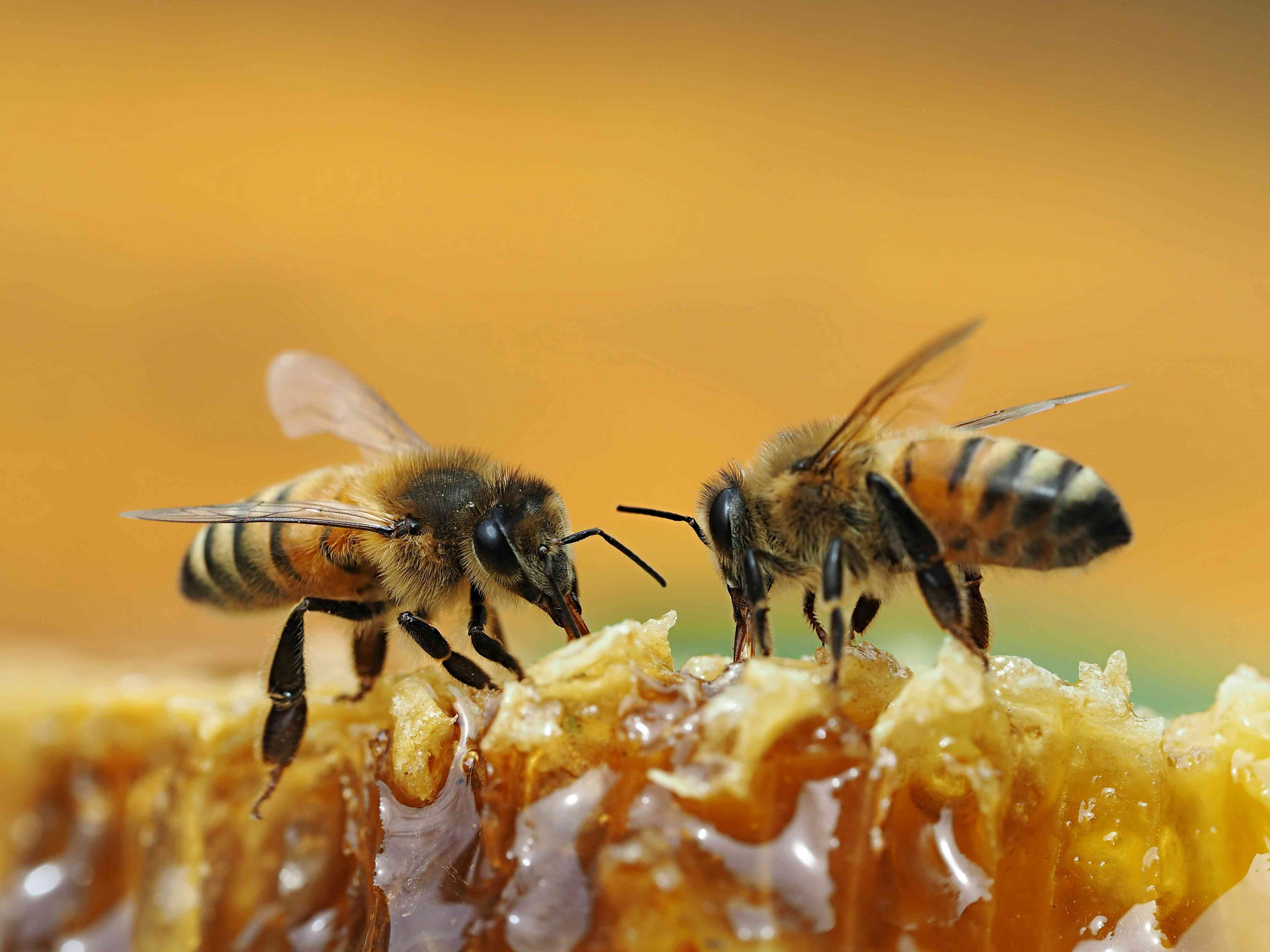 Close-Up Of Bees On Honey