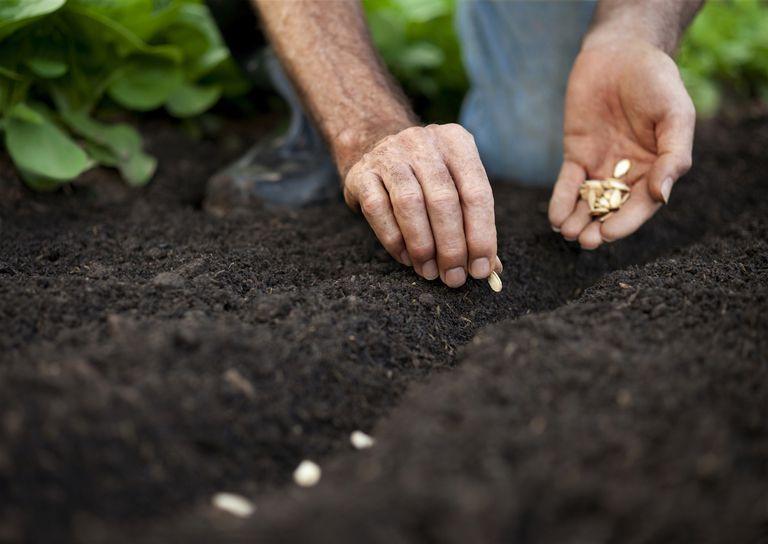 SeedPlanting_1500