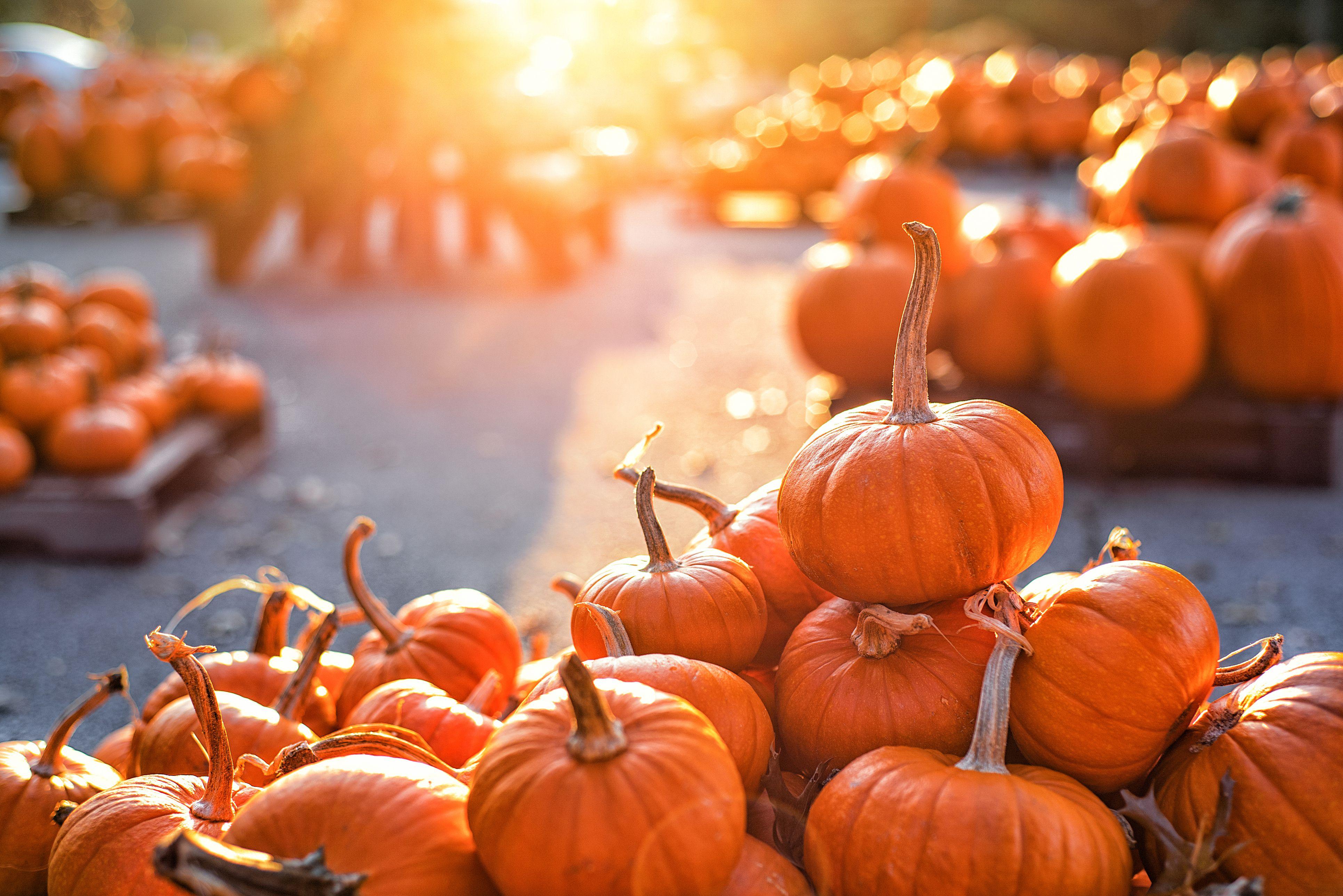 Pumpkins on pumpkin patch