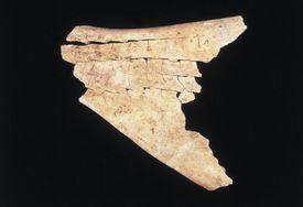 Chinese Oracle Bone