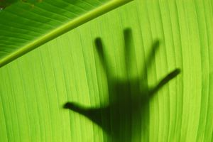 Handprint on green background