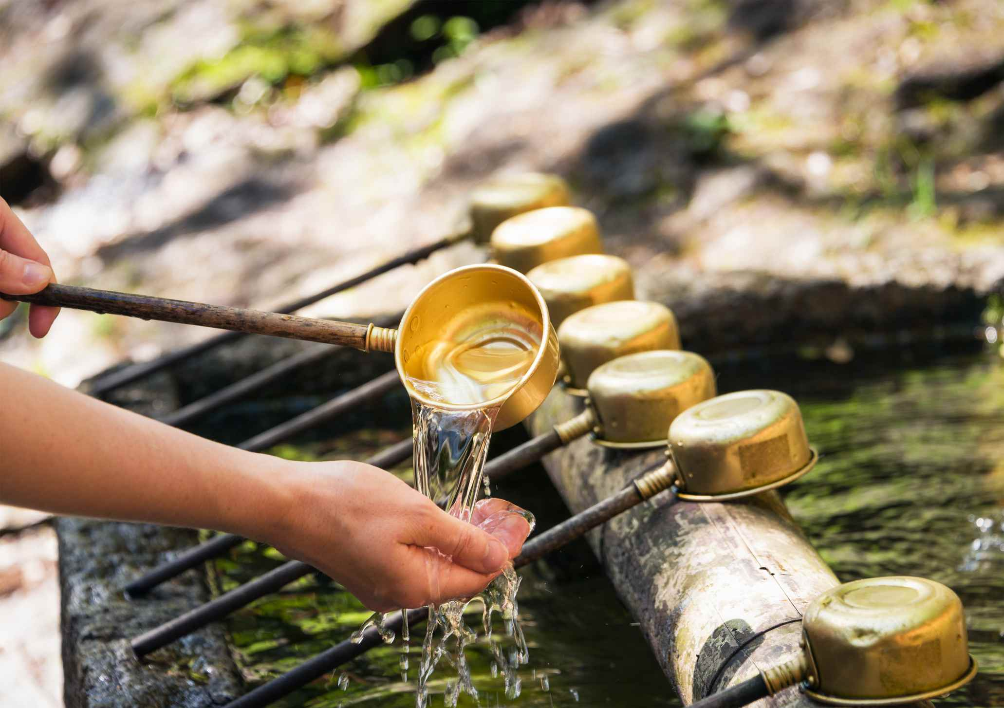 Purification at Shinto Shrine