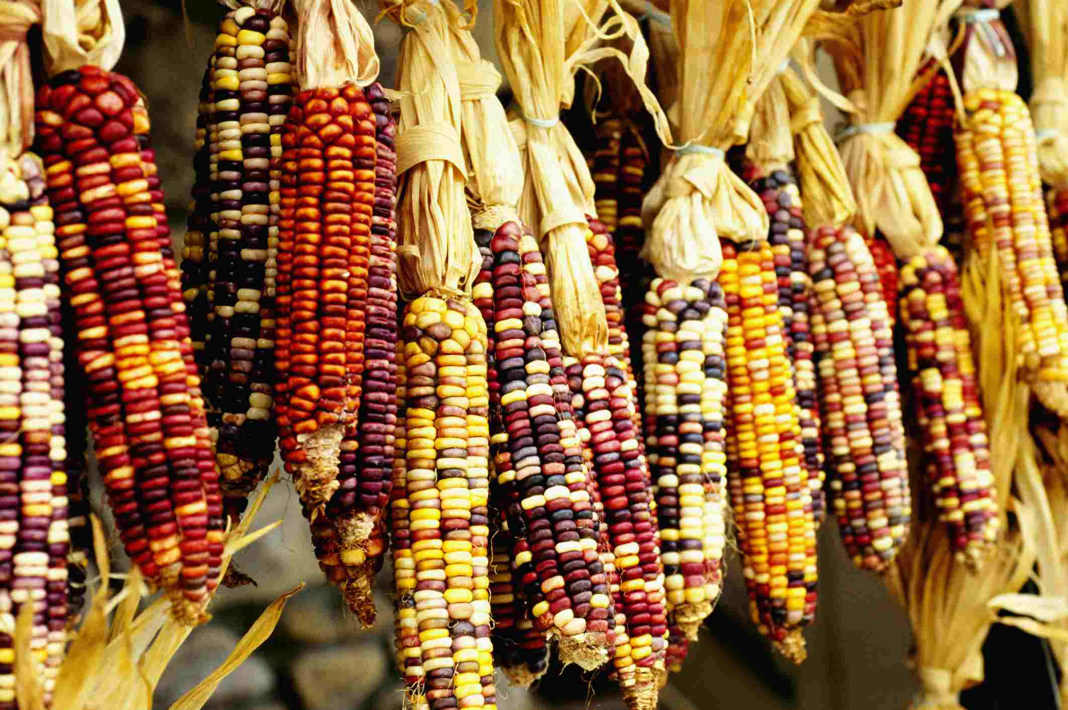 Close-up of colorful Indian corn in shop in Cherokee, North Carolina