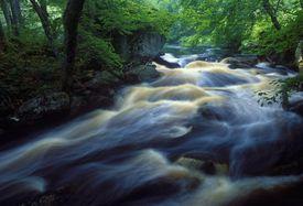 Swift Stream Through Forest