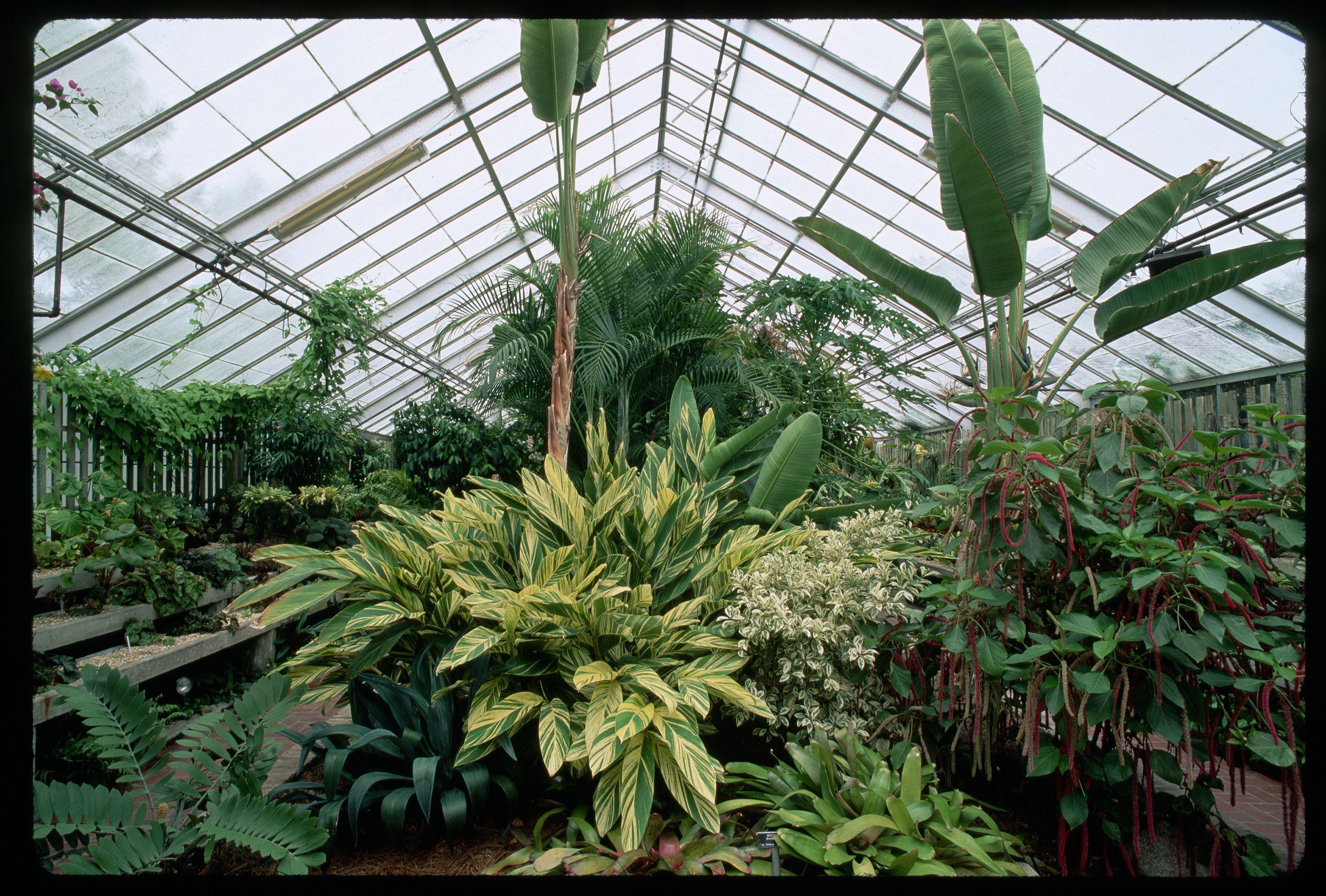 Interior of Arboretum at New Orleans Botanical Garden