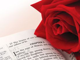 Rose of Sharon Song of Songs