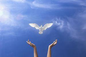 A dove flies free