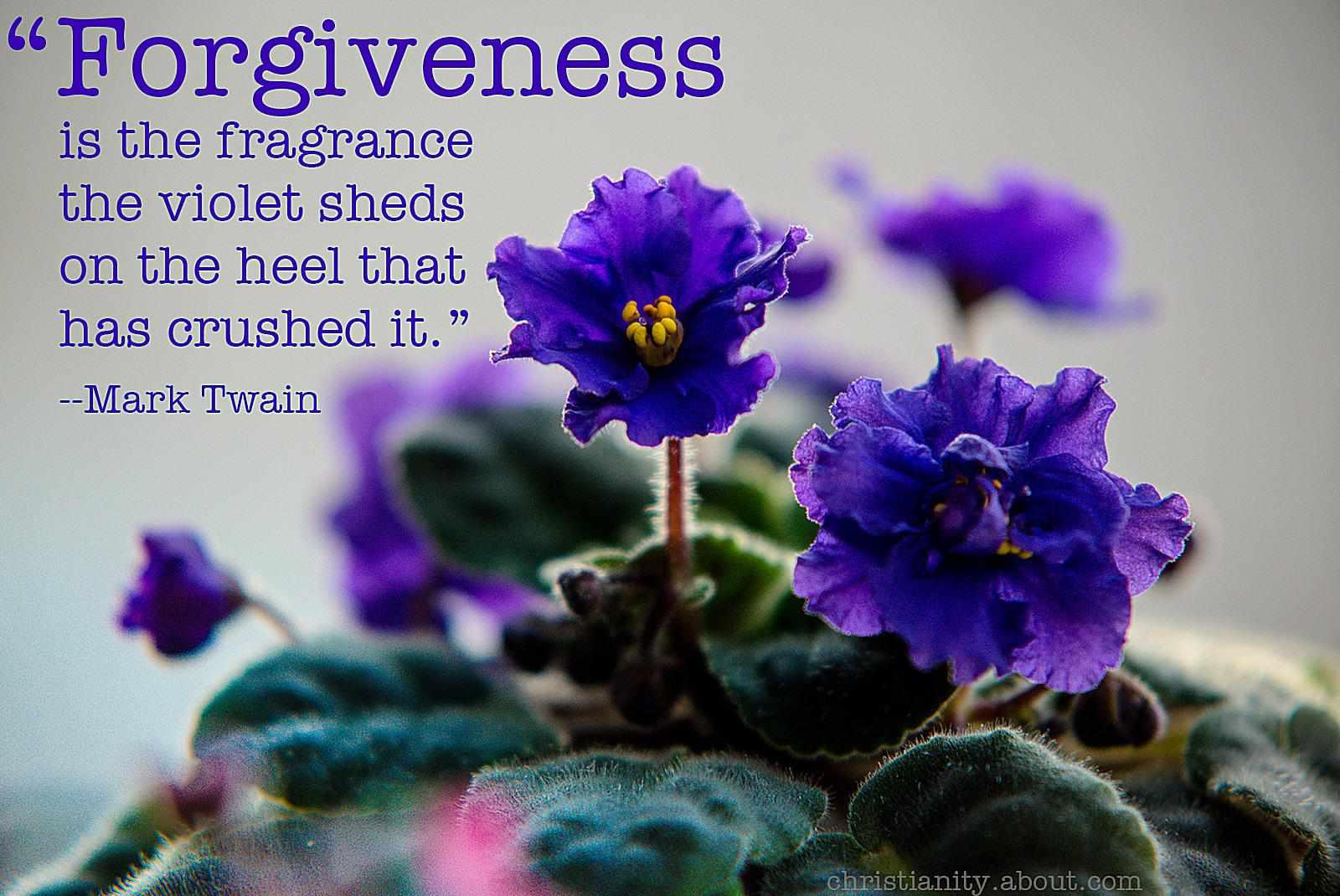 Forgiveness Emits a Fragrance