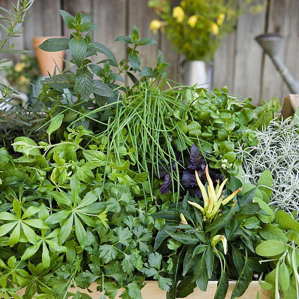 Using Herbs In Magical Workings