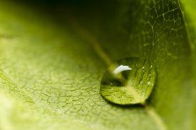 Dewdrop on Leaf