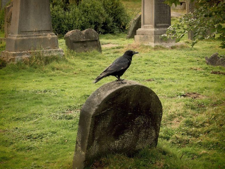 Raven on a gravestone